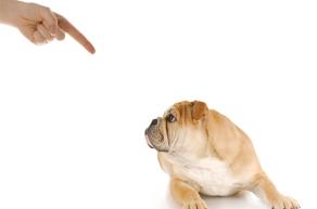 fotos-imagem-cachorro-cao-caes-levando-bronca