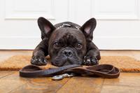 fotos-imagem-cao-cachorro-deitado