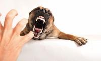 fotos-imagens-cachorro-caes-at
