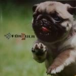 fotos-imagens-formula-pet-shop-brooklin