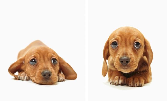 cachorro-fotos-imagens-triste