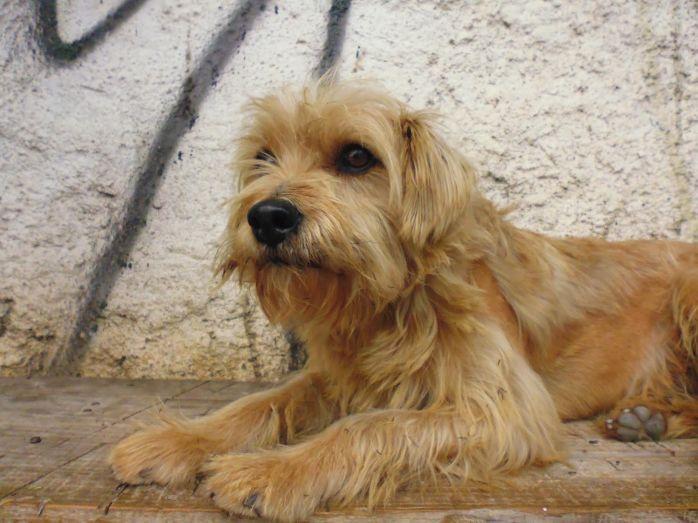 cachorro-para-doacao-fotos