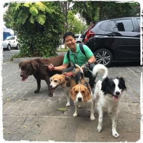 dog-walker-em-higienopolis-passeadores-de-caes