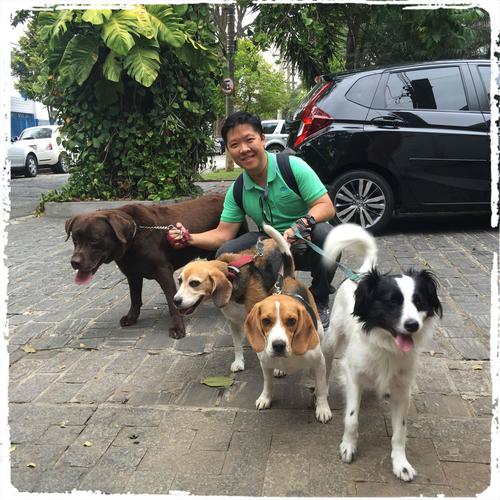 dog-walker-em-sao-paulo-sp
