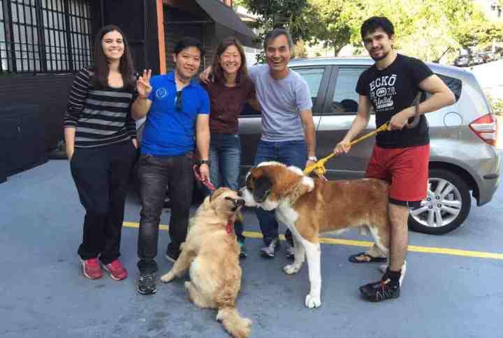 fotos-adestramento-de-caes-cachorros-sao-paulo-sp