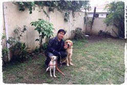 adestrador-adestramento-de-caes-cachorros