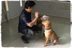 adestramento-cachorro-pitbull