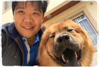 adestramento-de-caes-cachorro-chow-chow