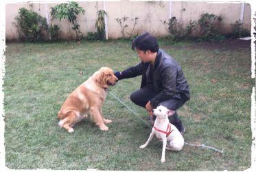 adestramento-de-caes-cachorros-sumare-sumarezinho