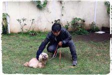 adestramento-inteligente-caes-cachorros-racas-pequenas