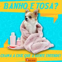 banho-e-tosa-caes-cachorros-chic-dog
