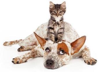 castracao-de-gatos-cachorros
