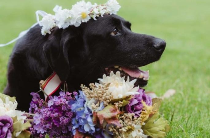 charlie-bear-casamento-fotos-imagnes