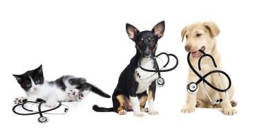 fotos-cachorros-caes-gatos-castracao