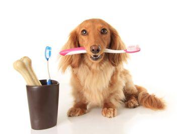 fotos-imagens-cachorros-escova-de-dente