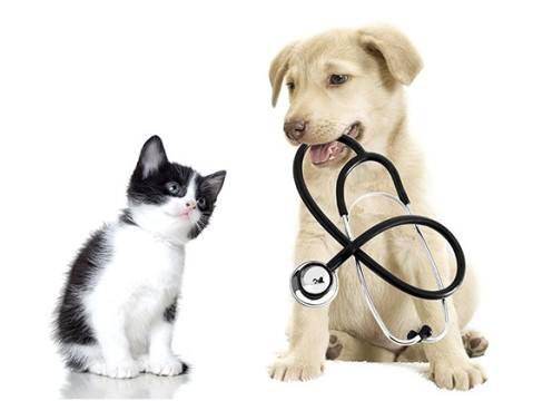 fotos-imagens-cachorros-gatos-caes-filhotes